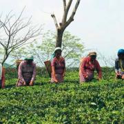 24 milhões de empregos serão criados na Economia Verde